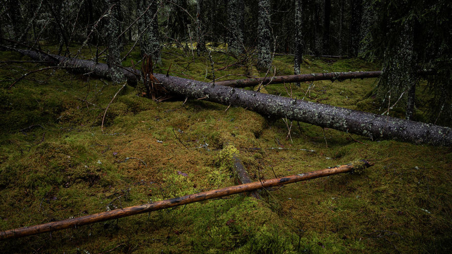 Wooden fence in forest