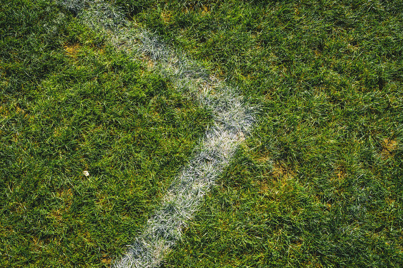 High angle view of leaf on field