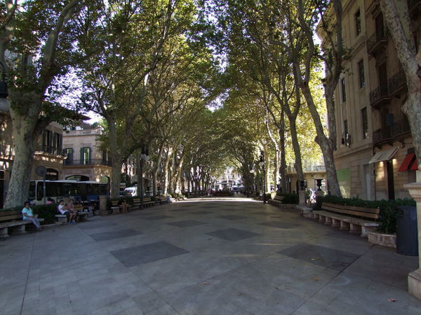 Passieg des Born, Palma Avenue City Composition Mallorca Palma Palma De Mallorca Passieg Des Born Pedestrian Walkway SPAIN Sunlight And Shade Tourist Attraction  Trees Benches Capital City City Covered Walkway Famous Place Full Frame Incidental People Nature Outdoor Photography Tourism Tourist Destination Travel Destination Walkway