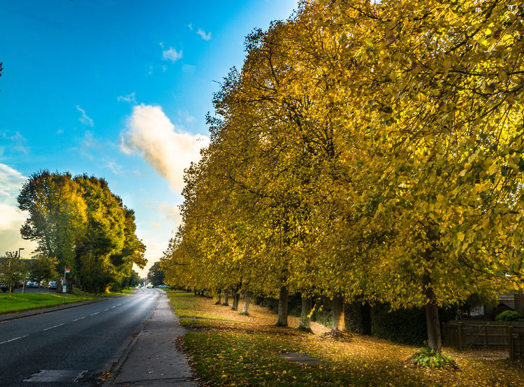 Road to the village Autumn Avenue Diminishing Perspective Fall Outdoors Road, Trees And Sky Vanishing Point Yellow Leaves