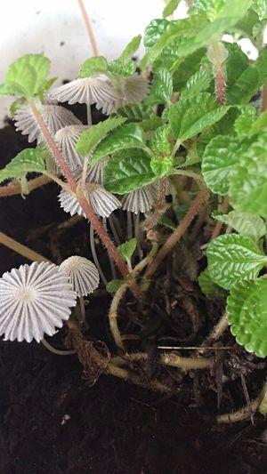 Hongos  Plantas Verde Blanco Tierra Negra