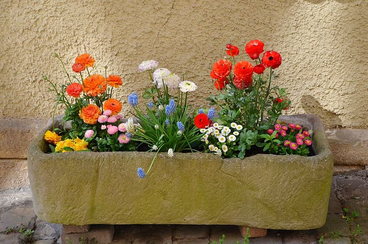 Flower Plant No People Bouquet Day Nature Outdoors Fragility Freshness Beauty In Nature Flower Head Close-up Window Box