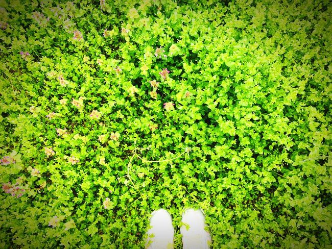 Grass in my head😇😇 Human Leg Grass Green Nature Low Section Standing One Person Human Body Part Shoe Human Foot Real People Personal Perspective Directly Above Growth Day Outdoors Beauty In Nature Human People