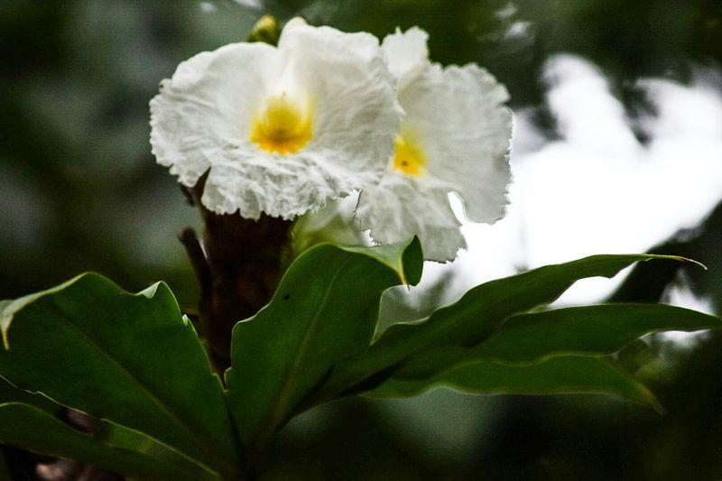 Flores Y Más Flores flores de Panamá Taking Photos Wildlife & Nature Canal De Panama  EyeEm Flower