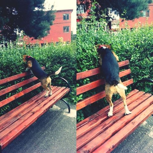 Curious Dog Taking Photos Obby