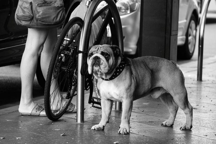 B&W Portrait Pet Streetphotography Streetphoto_bw Blackandwhite Black And White Monochrome Dog Doglife The Street Photographer - 2015 EyeEm Awards