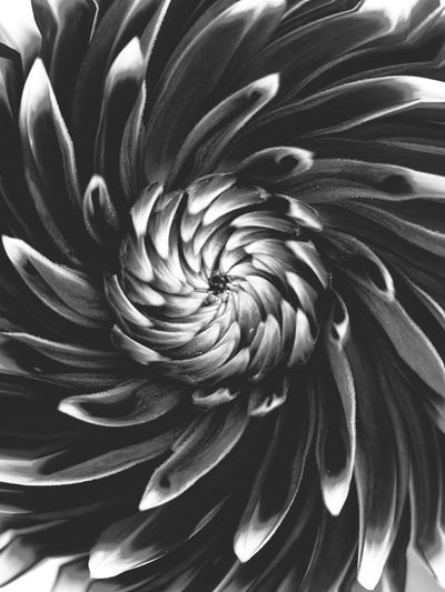 Daria Flower Bnw Sea Life Nature Underwater UnderSea Animal Themes No People Beauty In Nature