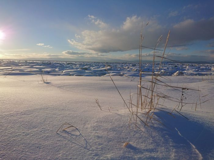 Sky Ice Beauty In Nature Snow Dryplant Sea Shore Winter Sun Cold Temperature Beach Outdoors Nature Mypointofview Closeup Sky And Clouds Skylovers