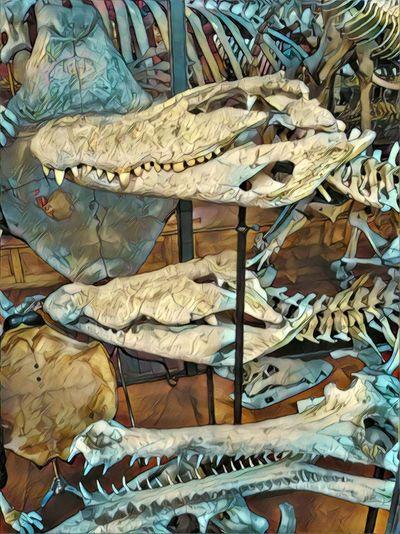 Museum Prehistoric Bones Aged