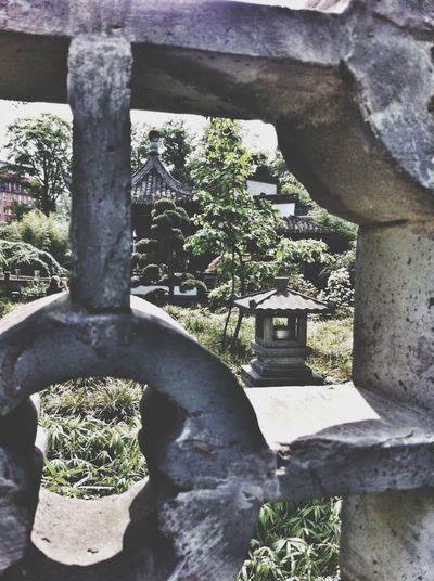 Canon Eos  Nature Taking Photos FlexoGrafie Asiangarden