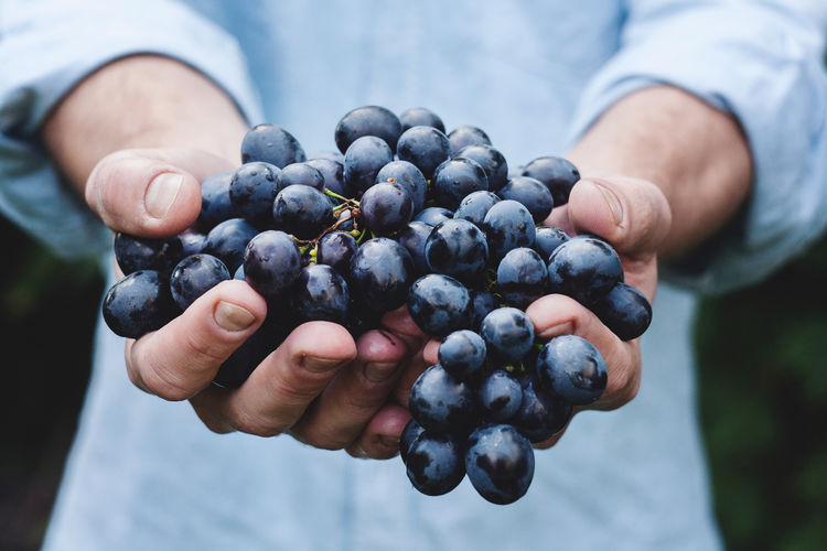 Berry Fruit Blueberry Close-up Day Finger Focus On Foreground Food Food And Drink Freshness Fruit Hand Hands Cupped Healthy Eating Holding Human Body Part Human Hand Lifestyles One Person Real People Ripe Wellbeing
