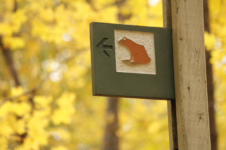 Go left for frog??? Sign No People Front View Frog Sign Arrow Symbol Guidance Nature Outdoors