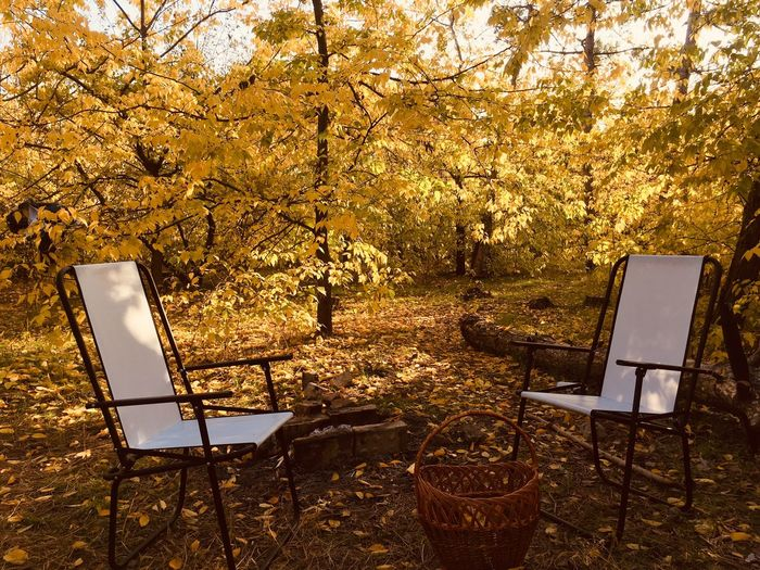 Empty chairs and table in park during autumn