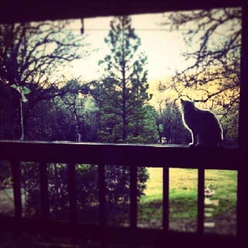 I Love Cats . Macy Meow cute kitty cat awesome amazing adorable photography animals