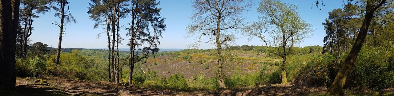 Panoramic Devils Punch Bowl Surrey Valley WoodLand Woods Sunny Day England Surrey Surrey Countryside Devils Punch Bowl English Countryside In Spring Tree Sky Grass First Eyeem Photo Countryside