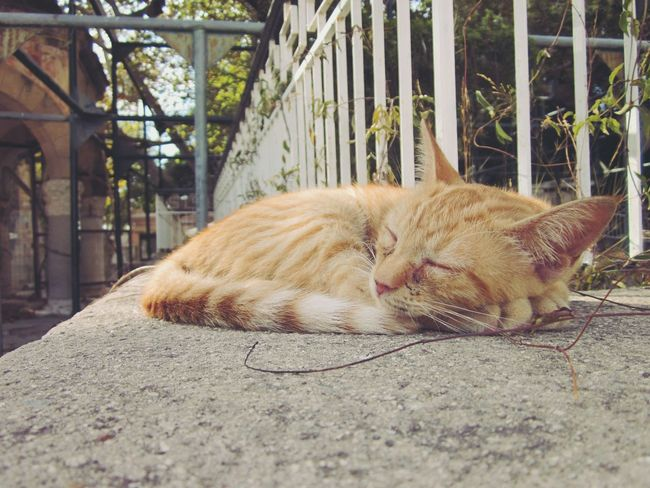 🇬🇷 Stray Of The Day Village Life Kos, Greece Kos Island Cats Of EyeEm Animals In The Wild Feline Outdoors Animal Themes Cats Of Greece Cats Of The Day Cats In Random Places Cats In Nature Cats In The Sun EyeEm Cat Lover Catslover Strays Of Greece Enjoying Life Sleepy Sleeping Always Be Cozy