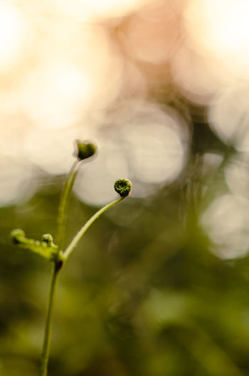 Little plant with beautiful bokeh during sunshine hour. Beautiful Bokeh Beauty In Nature Close-up Day Focus On Foreground Fragility Green Color Growth Nature No People Outdoors Plant Positive Background Selective Focus Sunshine Vulnerability