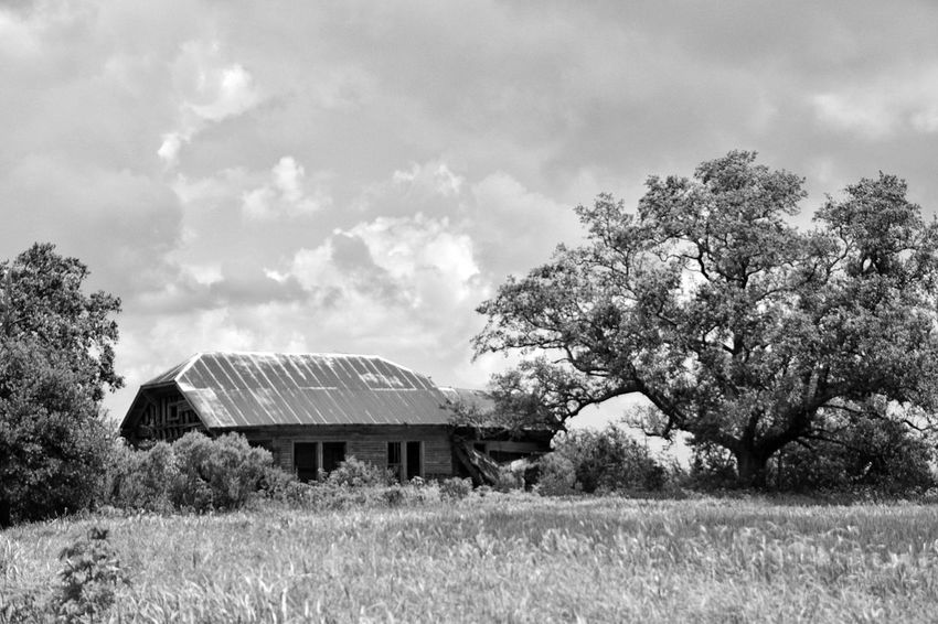 wondering Tree Grass Rural Scene Outdoors Sky Day Nature Landscape No People Oak Tree Rusty Metal Beauty In Nature Barn Farmhouse South Louisiana Building Exterior Abandoned Buildings Neglected Architecture Abandoned & Derelict Rustic Style Tin Roof Built Structure Black & White Photography Black And White Collection  Black And White Collection
