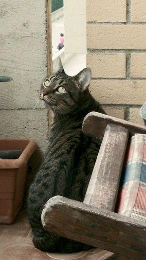 EyeEm Animal Lover Green Eyes Spy Cat Is Spying Snoop  Eyeem Market
