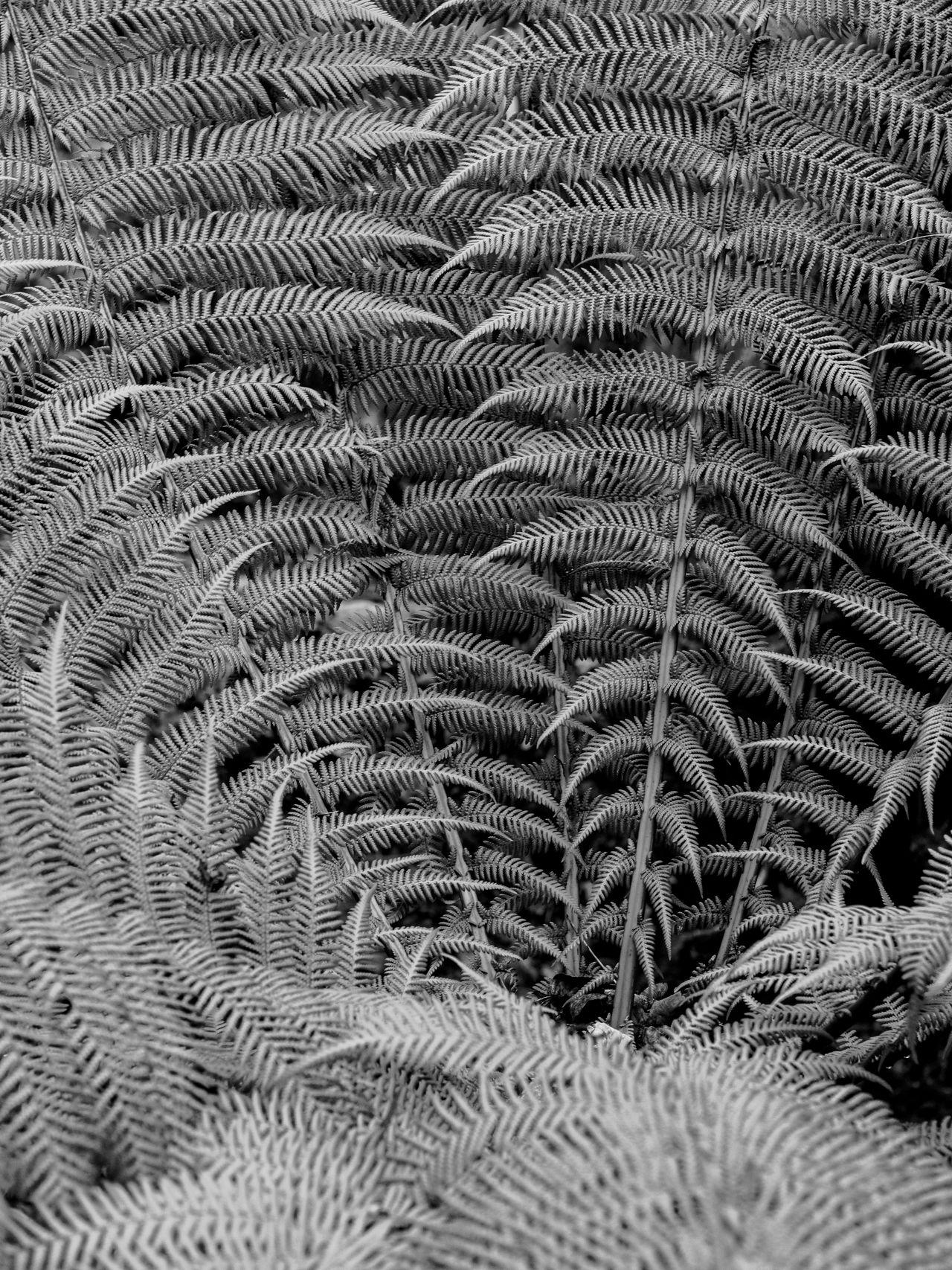 Full frame shot of lizard
