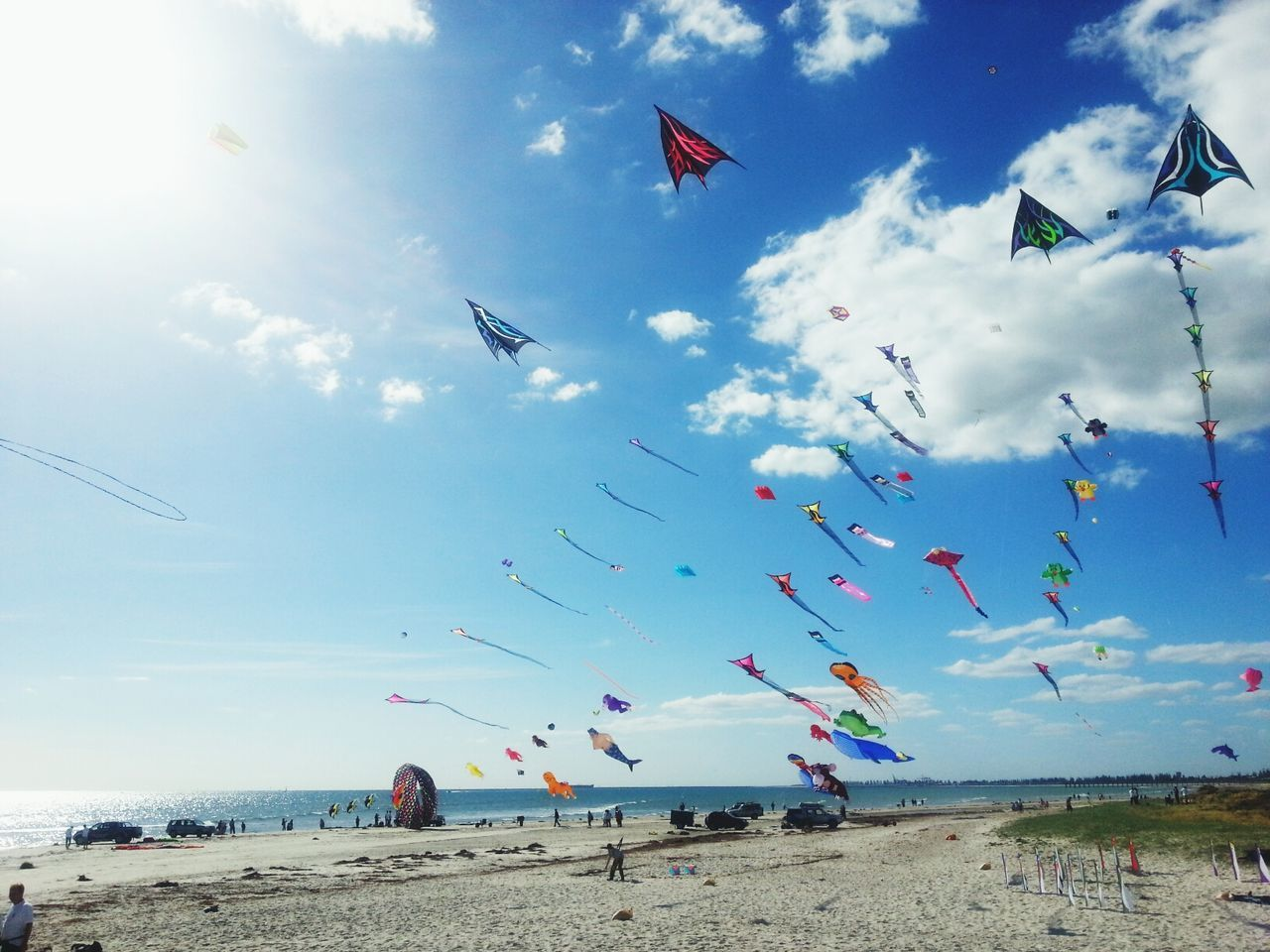 Kites being flown at beach