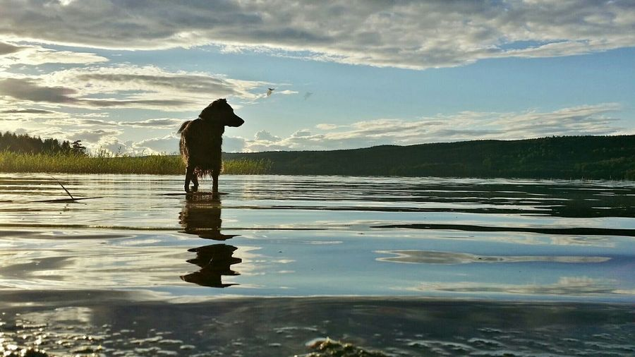 Summertime with my beloved Dog. Waterscape Water Reflections