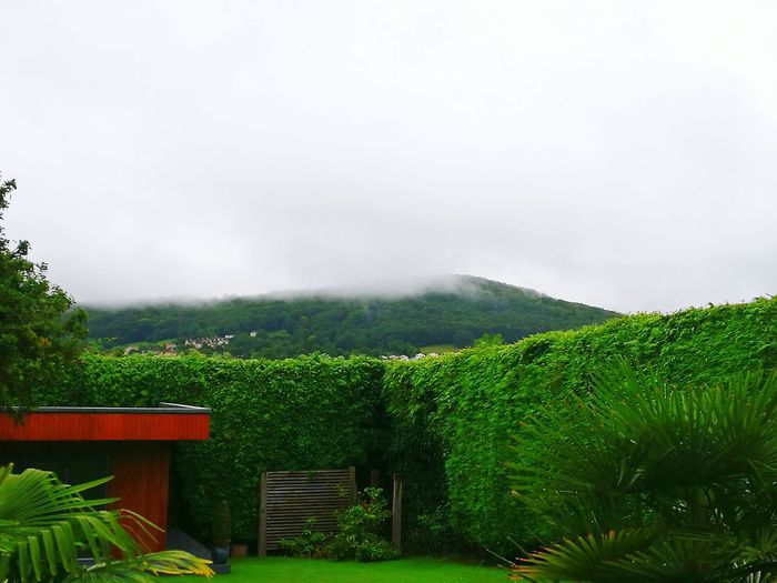 Cloud - Sky Outdoors Tree Fog Nature Grass No People Day Sky Beauty In Nature Hill Mist Mist Over Hill Hillside Shrouded In Mist Large Hedges Large Garden Striking Garden Striking Garden View Large Fur Tree Hedge City