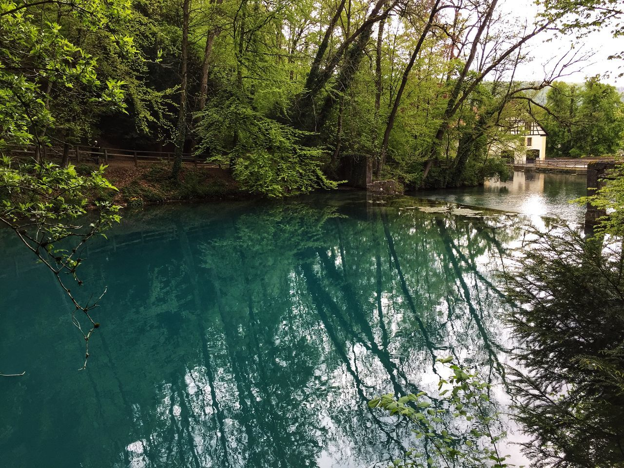 tree, water, plant, nature, no people, day, beauty in nature, tranquility, built structure, lake, forest, reflection, architecture, growth, tranquil scene, waterfront, outdoors, scenics - nature, woodland, turquoise colored