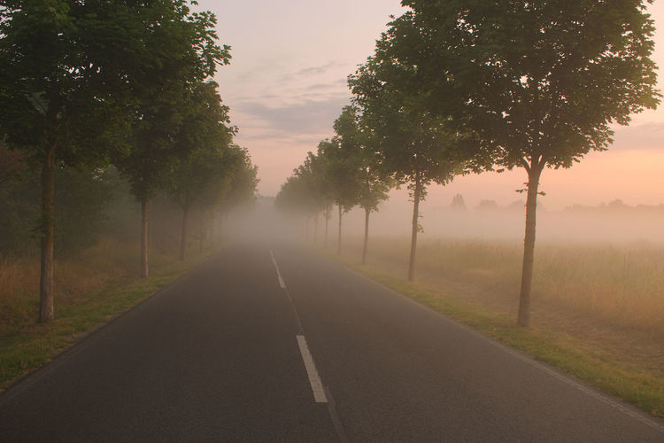 Mist Misty Morning Tree Plant Road Fog Direction The Way Forward Transportation Diminishing Perspective Nature Road Marking No People Marking Sky Tranquility Beauty In Nature Growth vanishing point Symbol Sign Outdoors