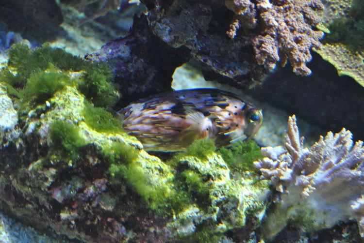 Underwater view of fish underwater