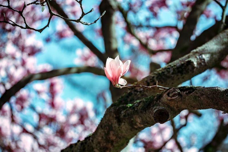 ©️870 Magnolia.