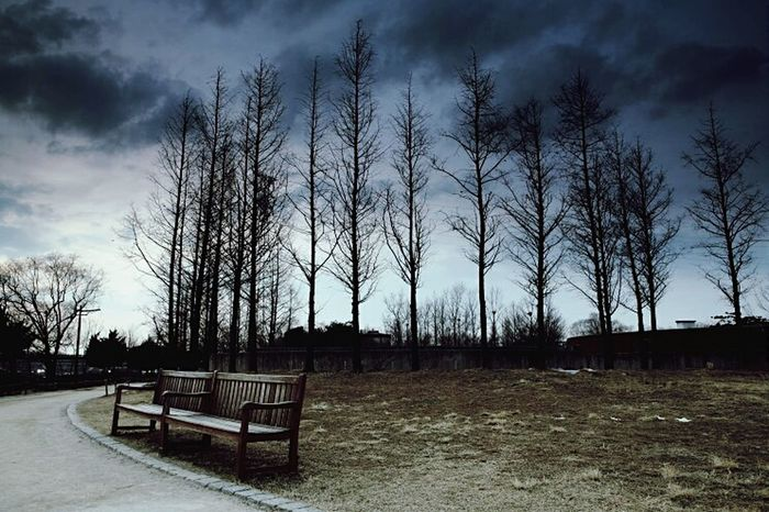 Sky And Clouds Hugging A Tree Feel Lonely Bench Park Bench Emptiness Nature EyeEm Nature Lover EyeEm Best Shots At The Park서울숲♥