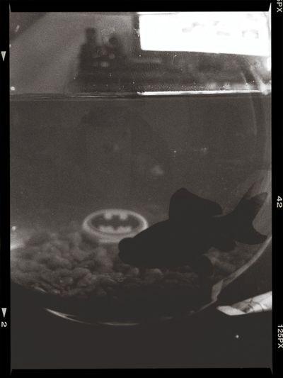 Batfish.
