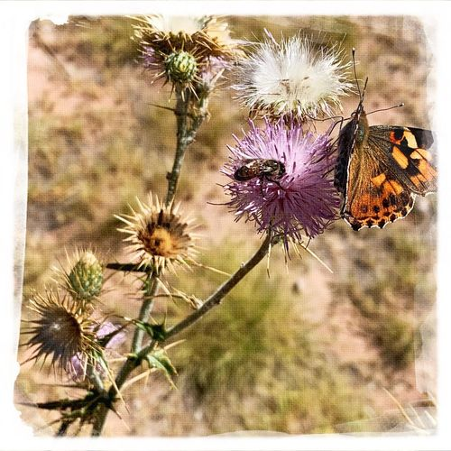 Butterfly's and