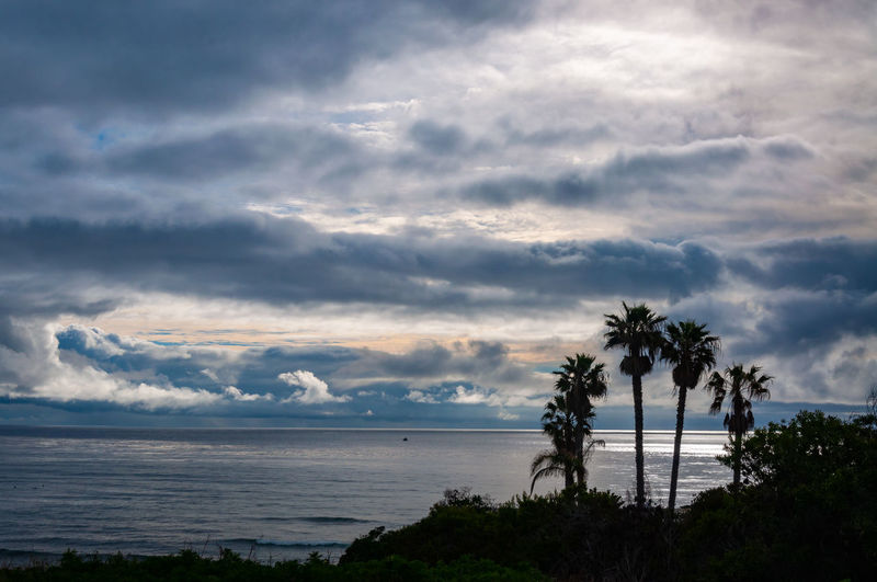 Sunset Cliffs Natural Park and Plant Preserve looking out over a dramatic stormy sky over the ocean. Cloud - Sky Sky Water Sea Tree Palm Tree Scenics - Nature Plant Beach Beauty In Nature Tropical Climate Land Horizon Nature Tranquil Scene Horizon Over Water Tranquility No People Outdoors Coconut Palm Tree