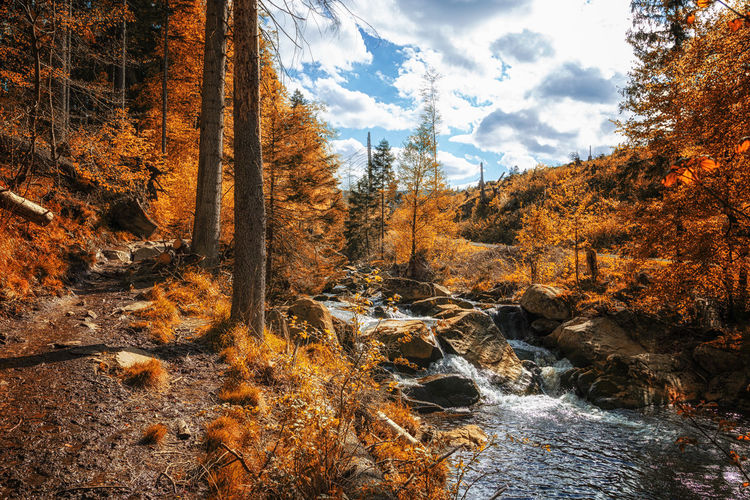 Scenic view of stream amidst trees in forest during autumn