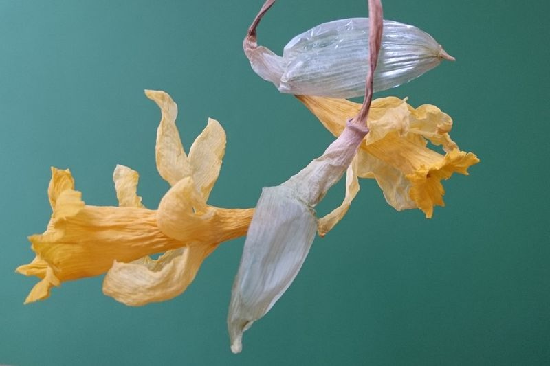 Close-up of yellow flower against blue background