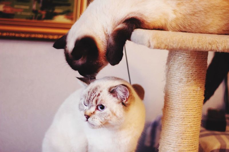 Close-up of two cats