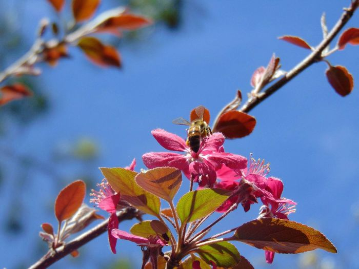 Close-Up Low Angle View Of Flowers Against Clear Blue Sky