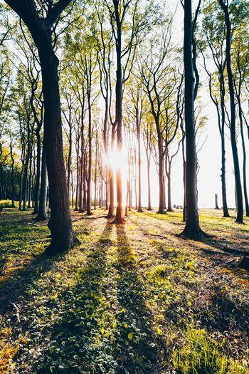 Sunlight streaming through trees in park