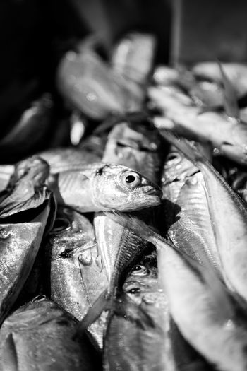 Close-up of fish for sale at market stall during night