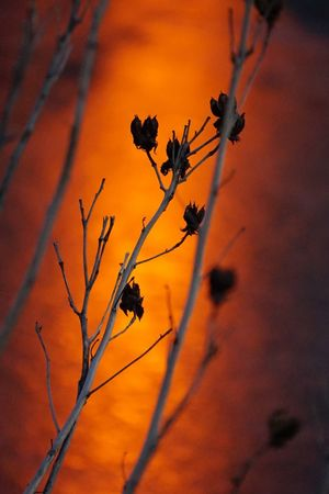 Orange By Motorola Sunset Park Pond Orange EyeEm Nature Lover Nature Nature_collection
