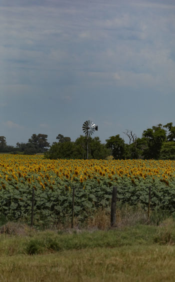 Scenic view of sunflower field against sky