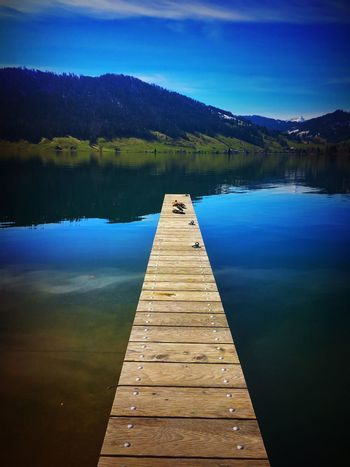 Aegerisee Animal Beauty In Nature Day Direction Ducks Idyllic Lake Mountain Nature No People Non-urban Scene Outdoors Pier Reflection Scenics - Nature Sky Standing Water Switzerland Tranquil Scene Tranquility Tree Water Wood Wood - Material