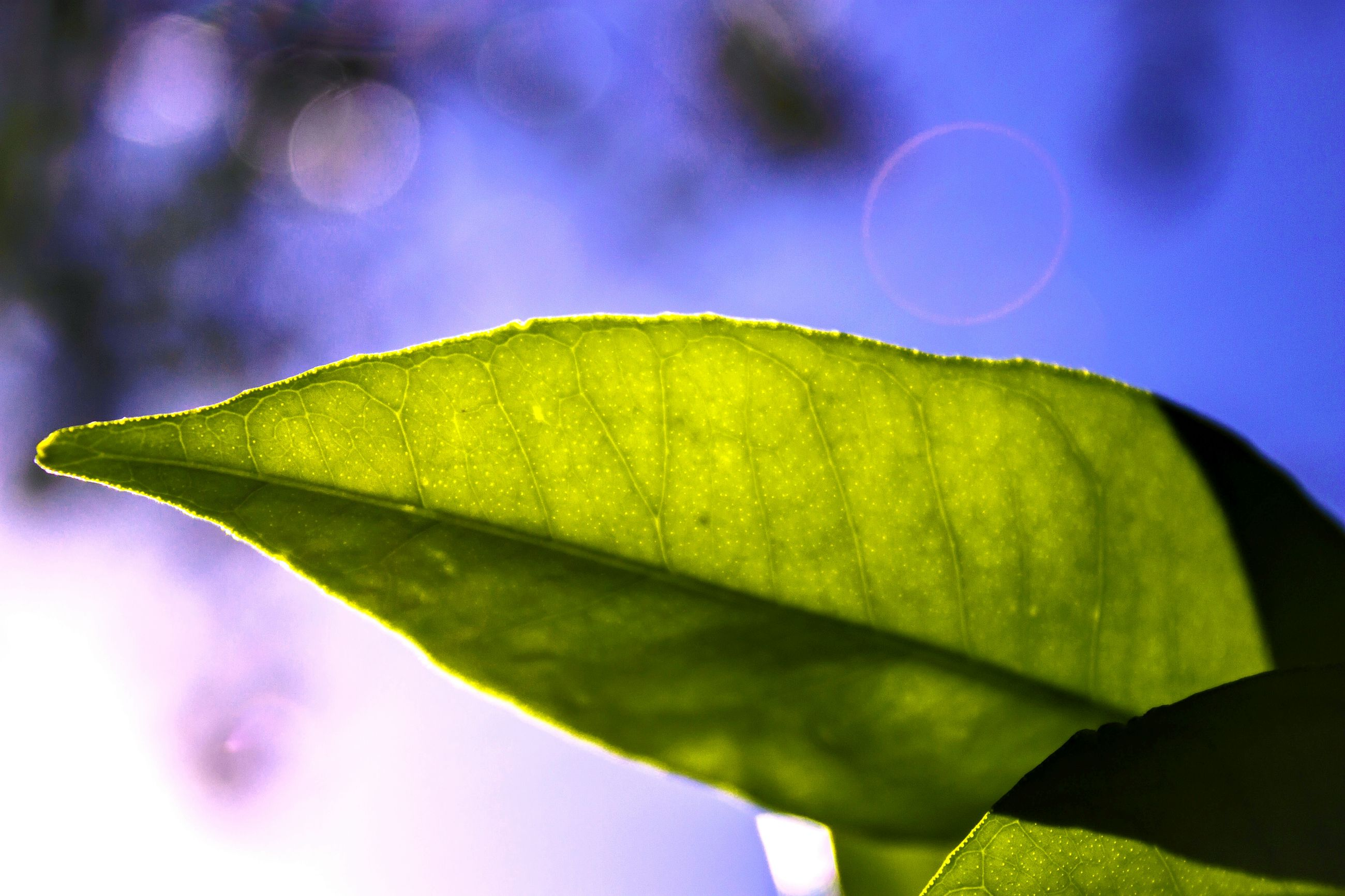close-up, leaf, leaf vein, focus on foreground, fragility, selective focus, green color, nature, plant, extreme close-up, growth, beauty in nature, day, freshness, outdoors, green, tranquility, no people