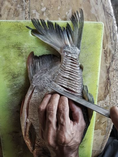 Close-up high angle view of human hand preparing fish