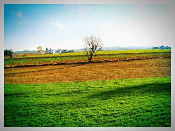 Landscape Rural Scene Agriculture Field Tranquil Scene Farm Scenics Nature Beauty In Nature Plant Green Color Outdoors Tree Spring