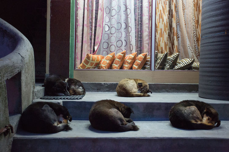 5 Dogs Animal Themes Capture The Moment Close-up Cold Cold Temperature Day Dog Dogs Dogslife India Indoors  Lazy Day Life Night Nightphotography No People Pattern Row Sikkim Sleep Sleeping Street Street Photography Streetphotography Window Fresh On Market 2017
