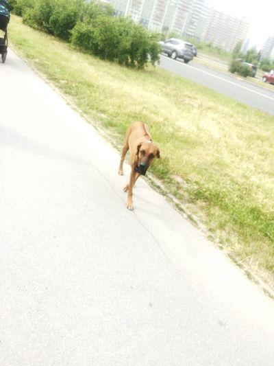 One Animal Canine Dog Domestic Animals Domestic Pets Animal Themes