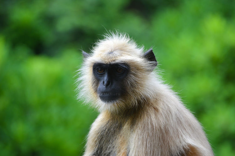 Close-up of a monkey sitting on a natural background